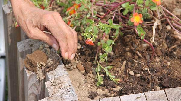 ehpad guadeloupe jardins de belost alzheimer saint claude basse terre rainbow sante antilles guyane animations ehpad 5